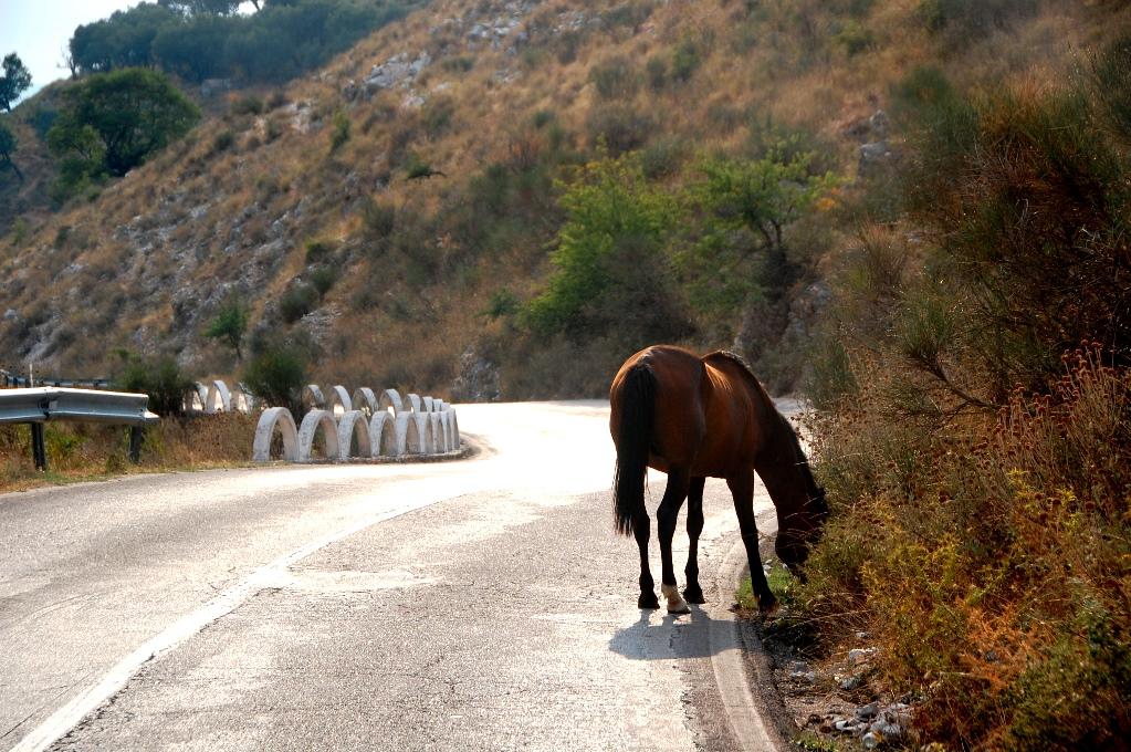 Plötsligt står det en häst mitt i vägen
