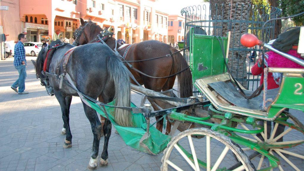 Häst och vagn Marrakech