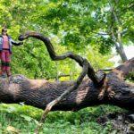 Dalby söderskog – Europas minsta nationalpark