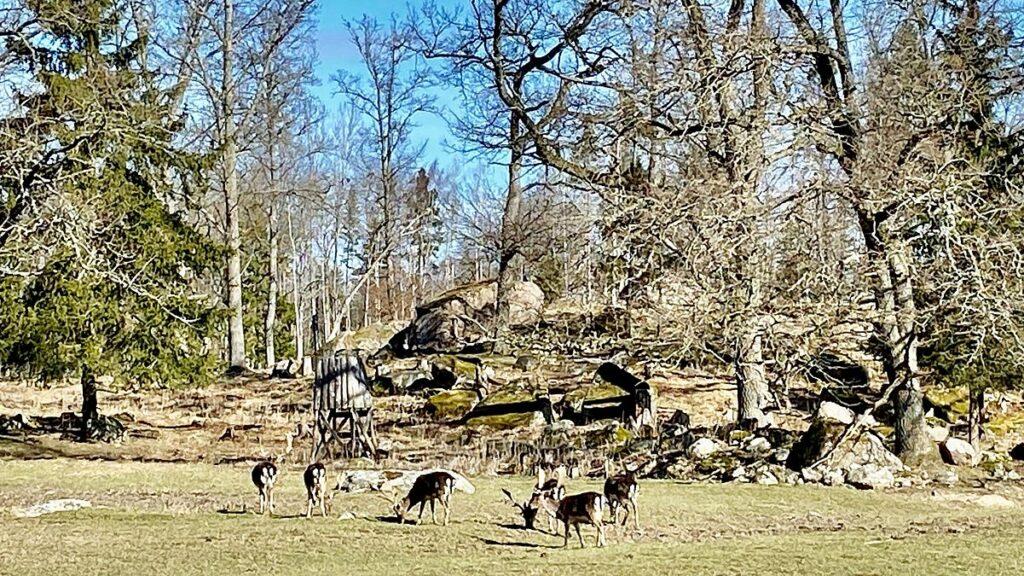 Hjortar vid Stora Sundby slott