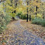 Att blogga varje dag – några reflektioner