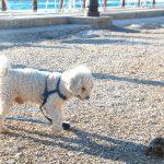Resa med hund eller katt – vad gäller?