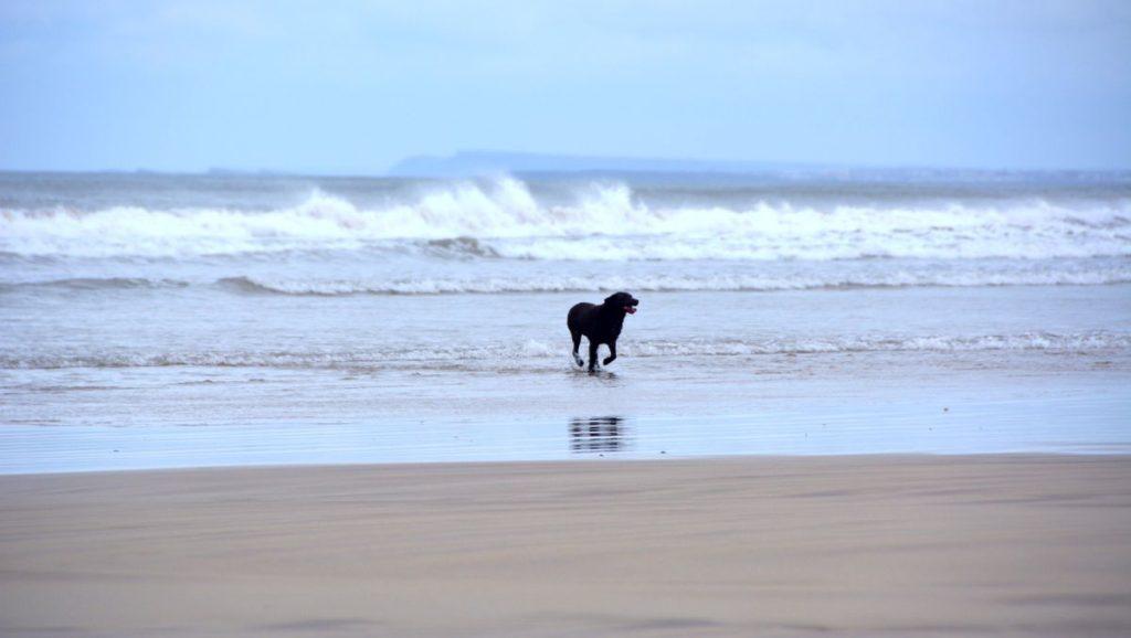 Hund vågor