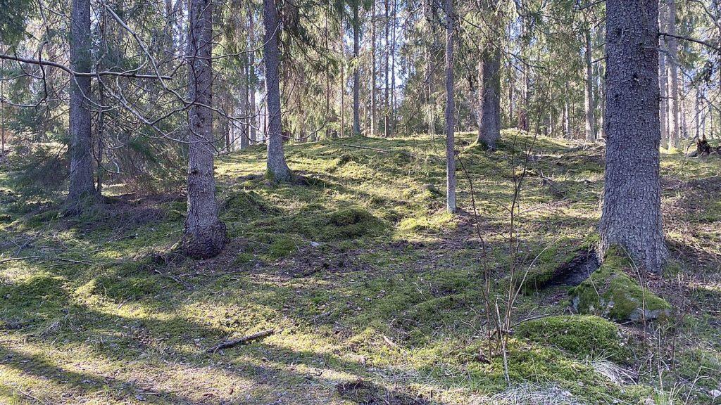 Göra i Stockholm - natur