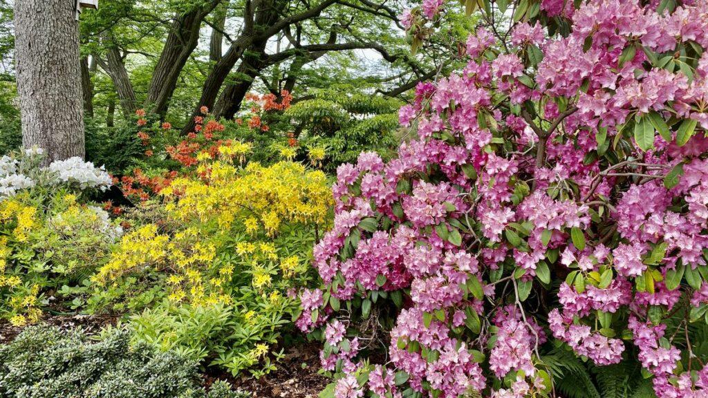Botaniska trädgården i Lund
