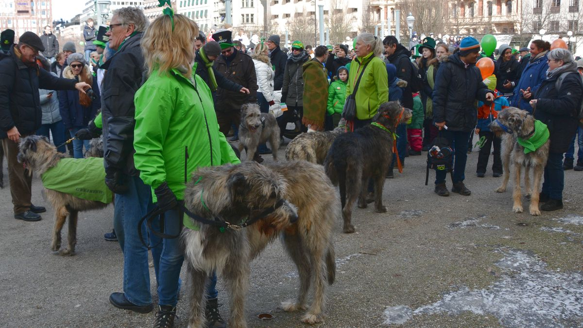 Irländska hundar