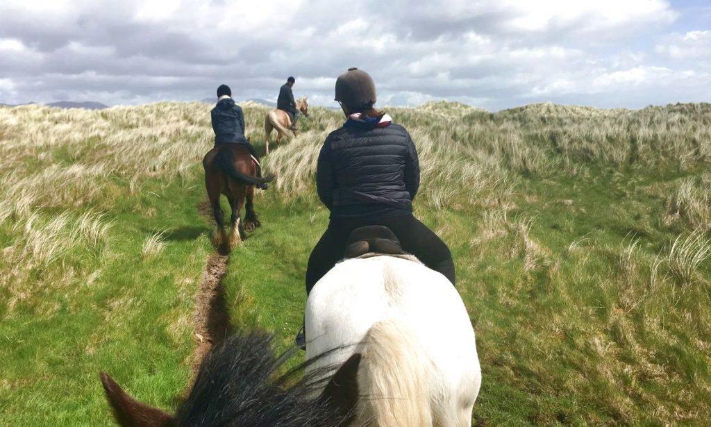 Irland hästar
