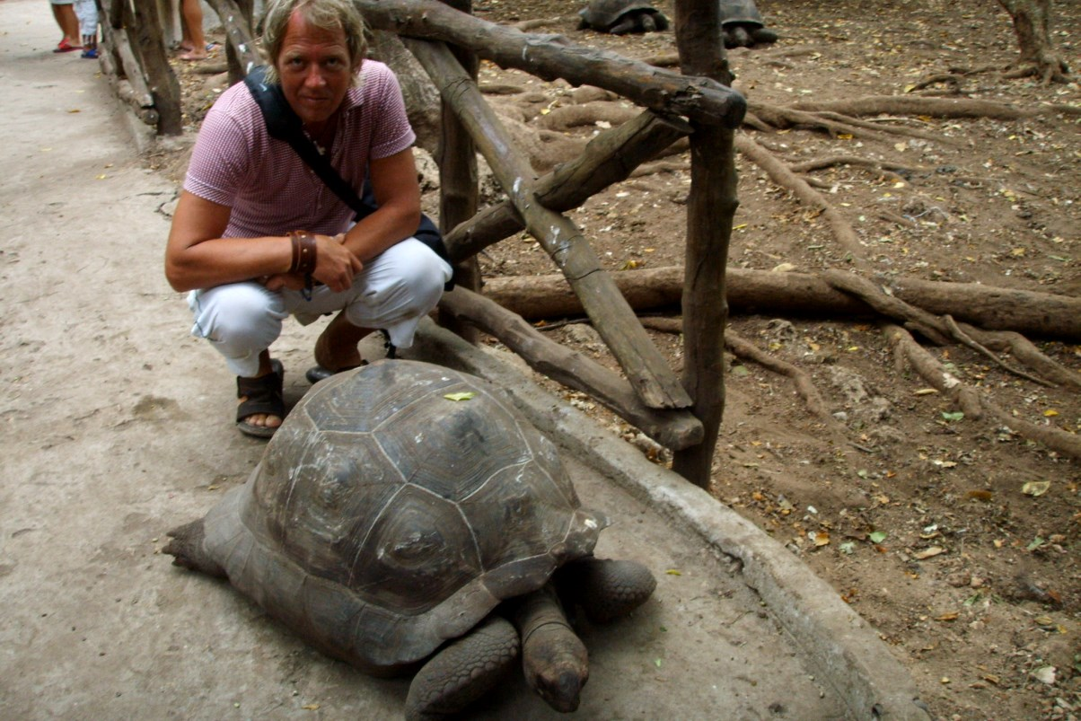 Jättesköldpaddor