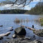 Judarskogens naturreservat i Bromma – natur mitt i stan