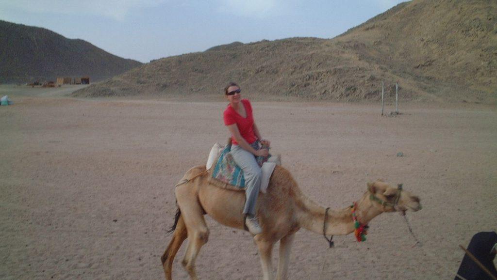 Kamel Egypten