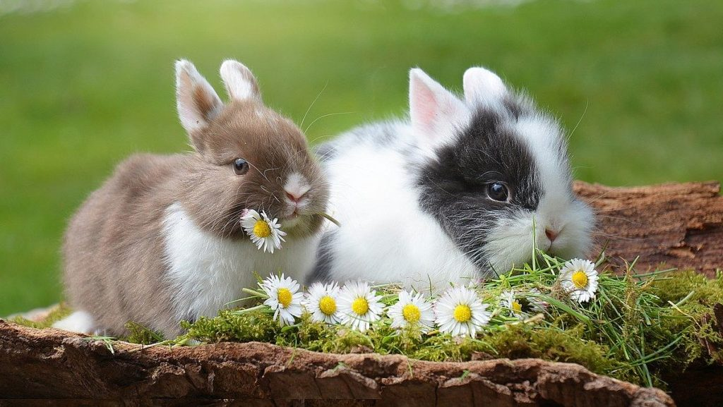 Påsk i Sverige och kaniner