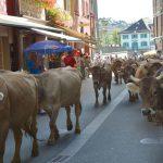Appenzell i Schweiz – delikatesser, linbana och direktdemokrati