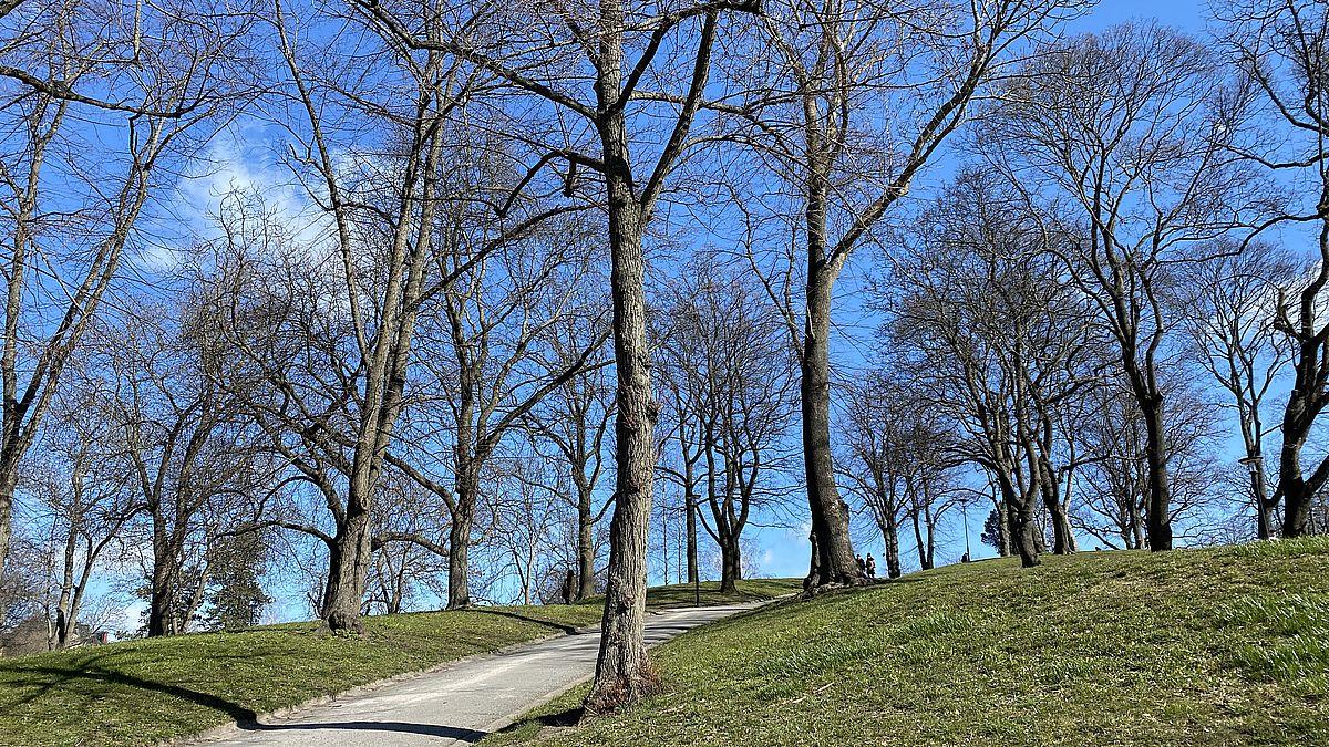 Parker på Kungsholmen - Kronobergsparken