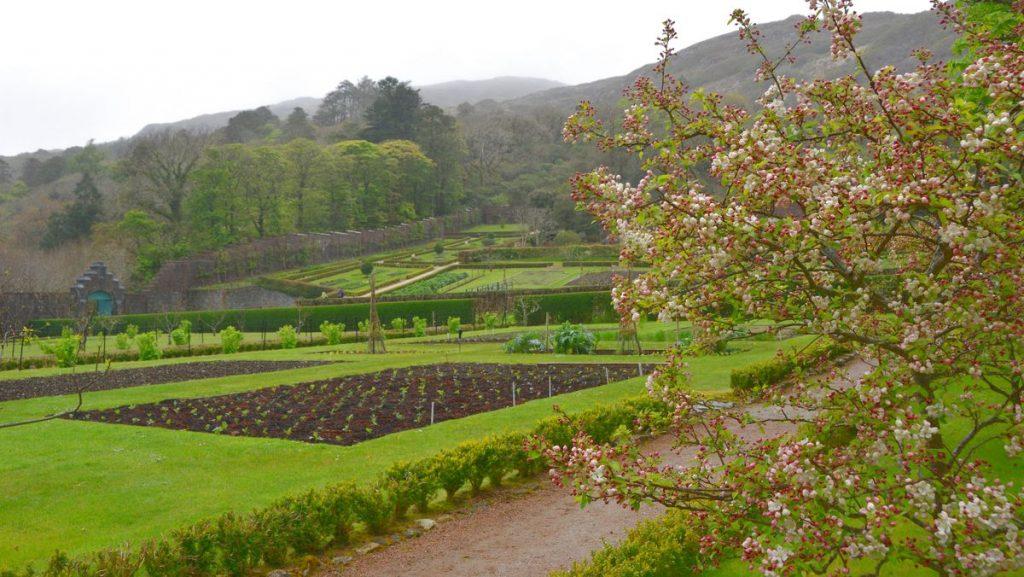Kylemore abbey viktoriansk trädgård