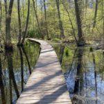 Kyrksjölötens naturreservat – vid Kyrksjön i Bromma