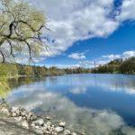Lötsjön och Råstasjön – natur i Solna och Sundbyberg