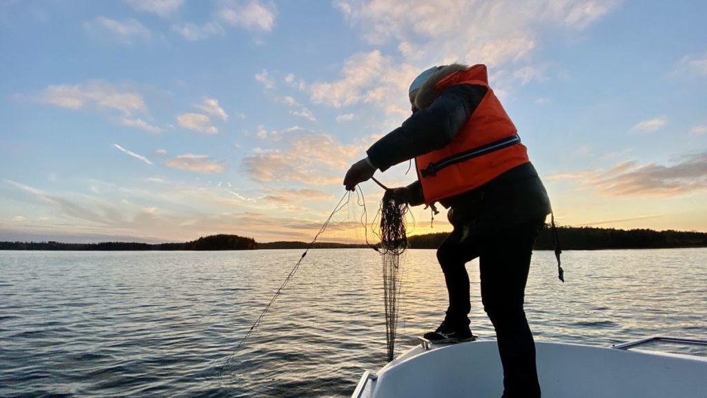 Fiska med nät i Mälaren