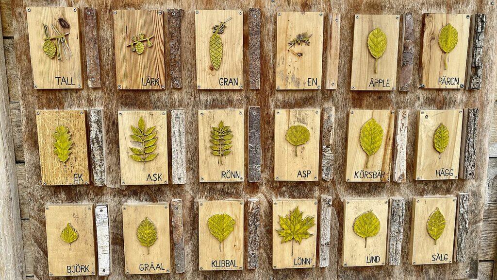 Gamla Linköping - lära om löv