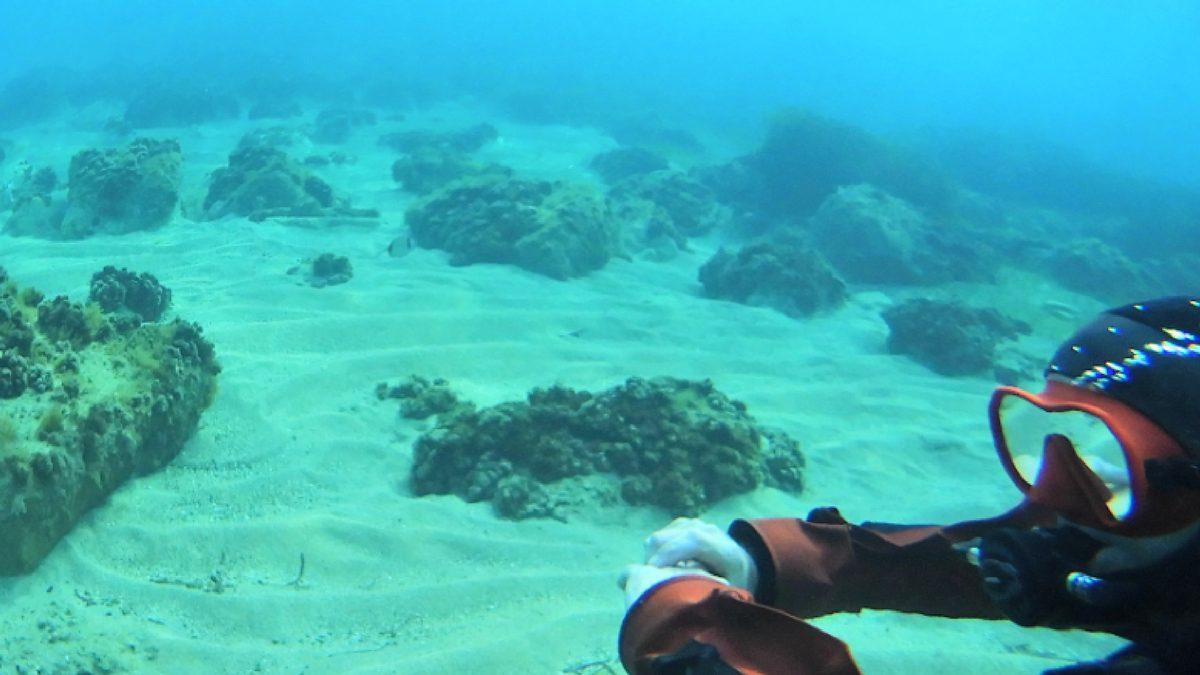 Dykning Malta