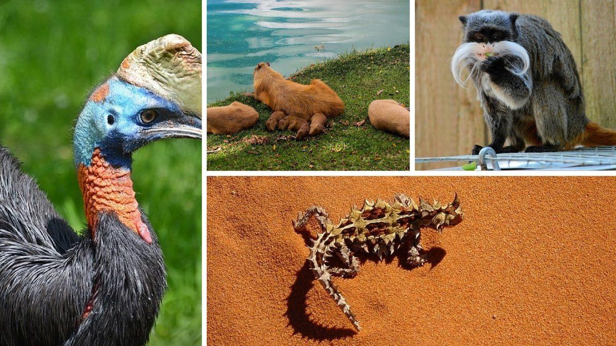djur på min bucket list