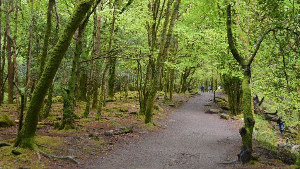 Natur Irland