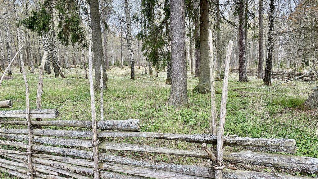 Gamla Linköping naturreservat