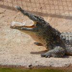 Världens dödligaste djur – Topp 15 farliga djur