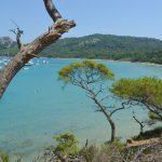 Ön Porquerolles i Frankrike – guldöar på franska rivieran