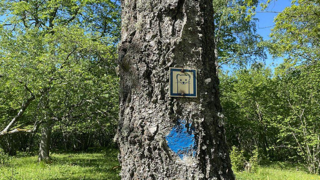 Nyfikna illern i Riddersholms naturreservat