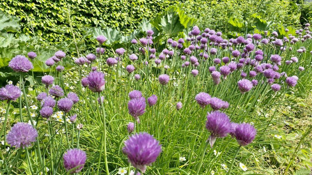 Trädgård i Huseby bruk