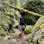 Tivedens nationalpark – vandring i vilda skogar