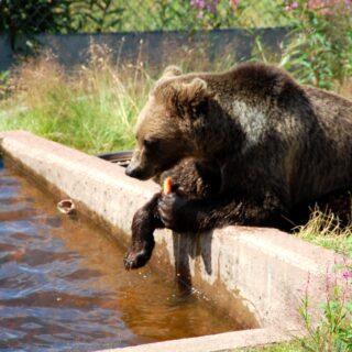 Orsa björnpark