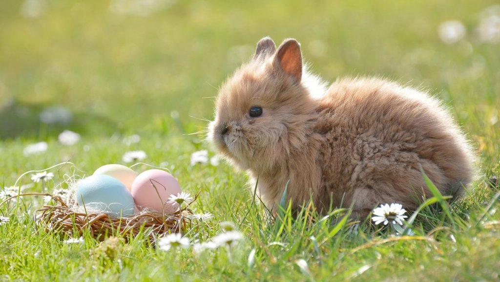 Fakta om påsken: påskhare