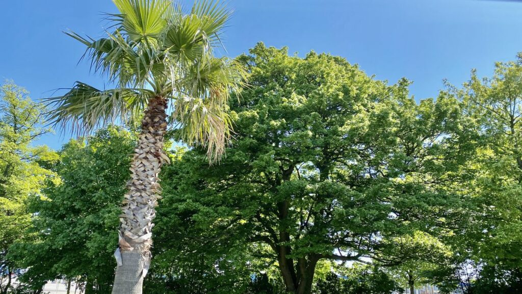 Göra i Trelleborg - palmstaden