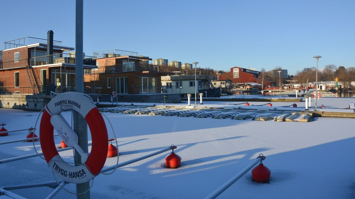 Pampas marina vinter