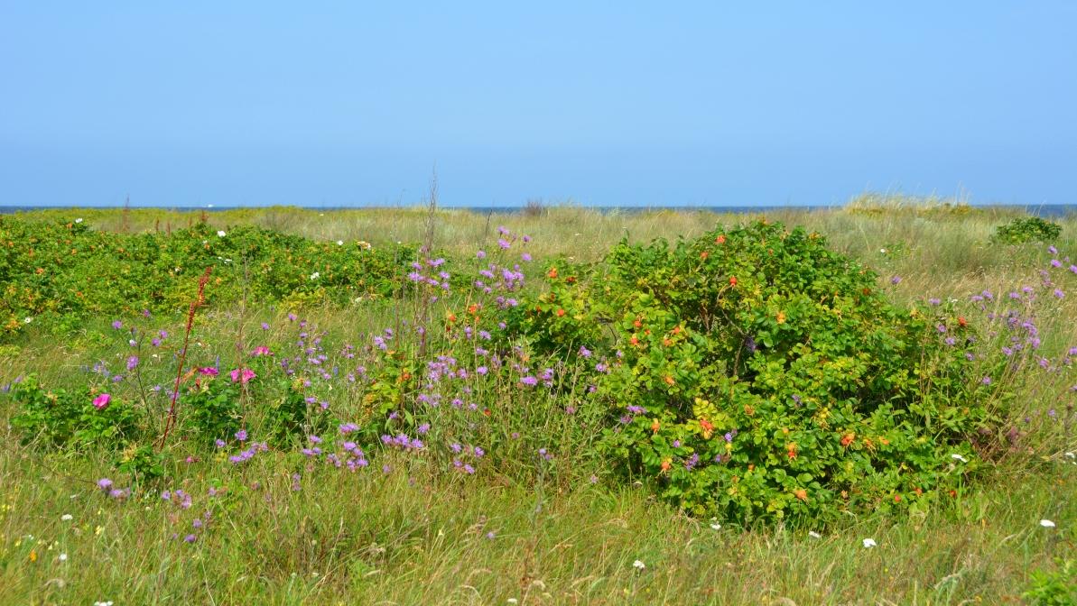 Naturskyddsområde mellan Mechelinki och Rewa