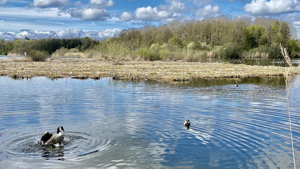 Fåglar vid Råstasjön