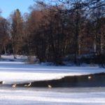 Lötsjön och Råstasjön i Solna och Sundbyberg