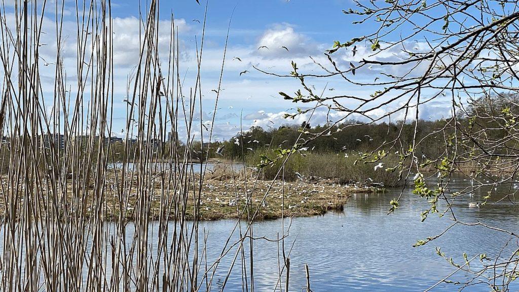 Råstasjön i Solna