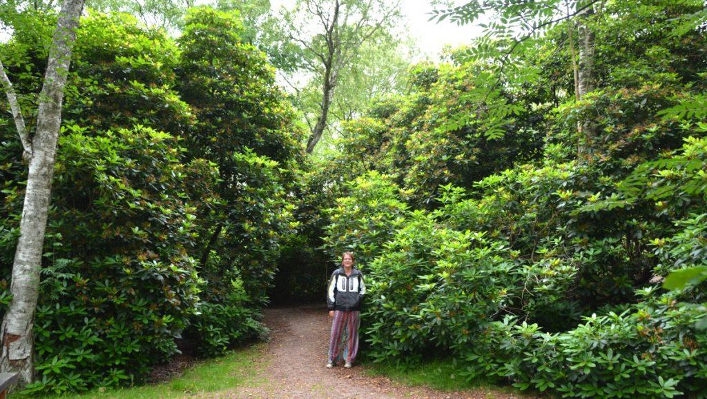 Rhododendronparken i Tylsöand