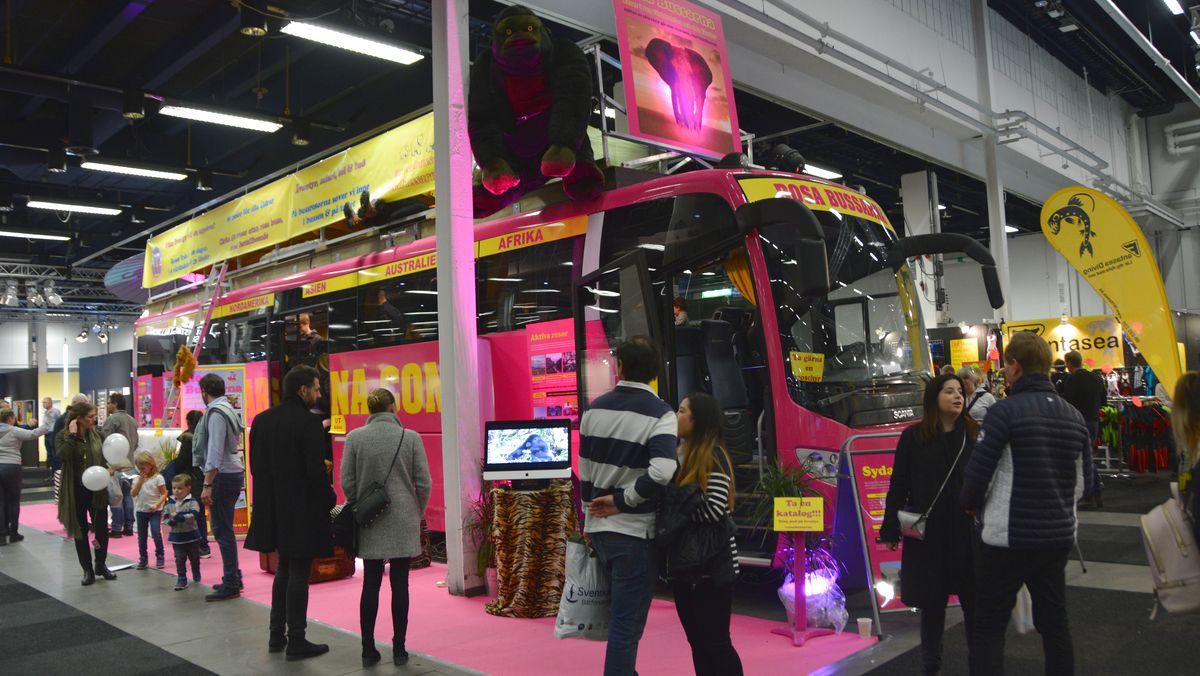 Rosa bussarna