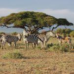 Malariaprofylax inför Afrikaresa