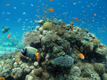 Korallrev i Israel