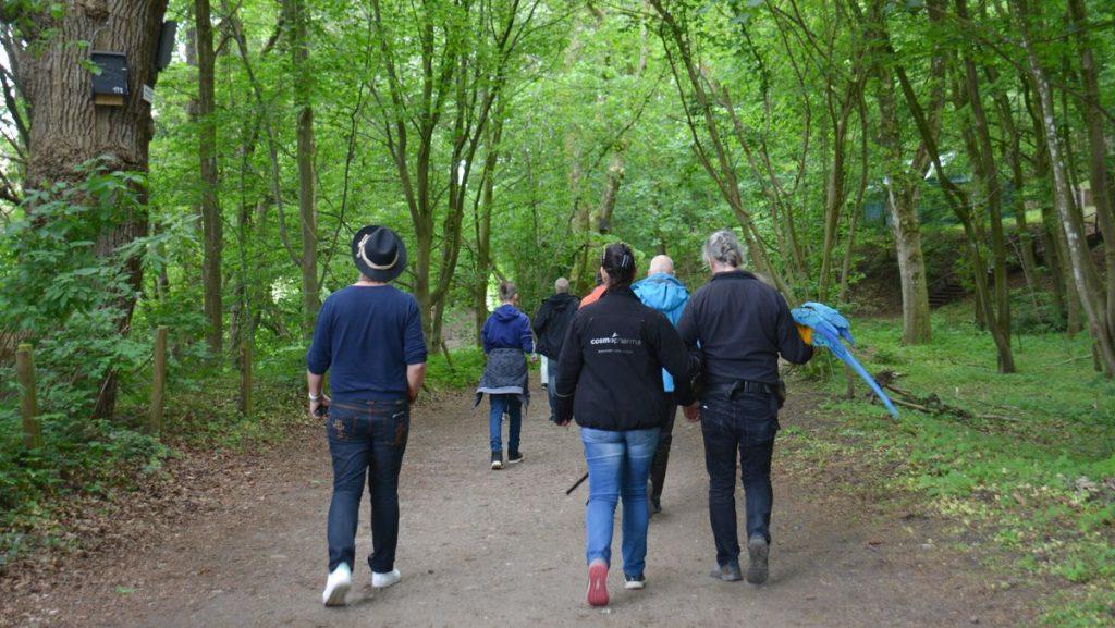 Vandring i skogen i Schleswig-Holstein