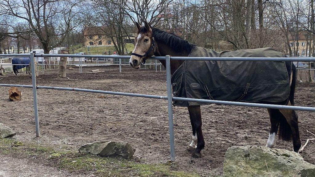 Häst vid Huvudsta gård