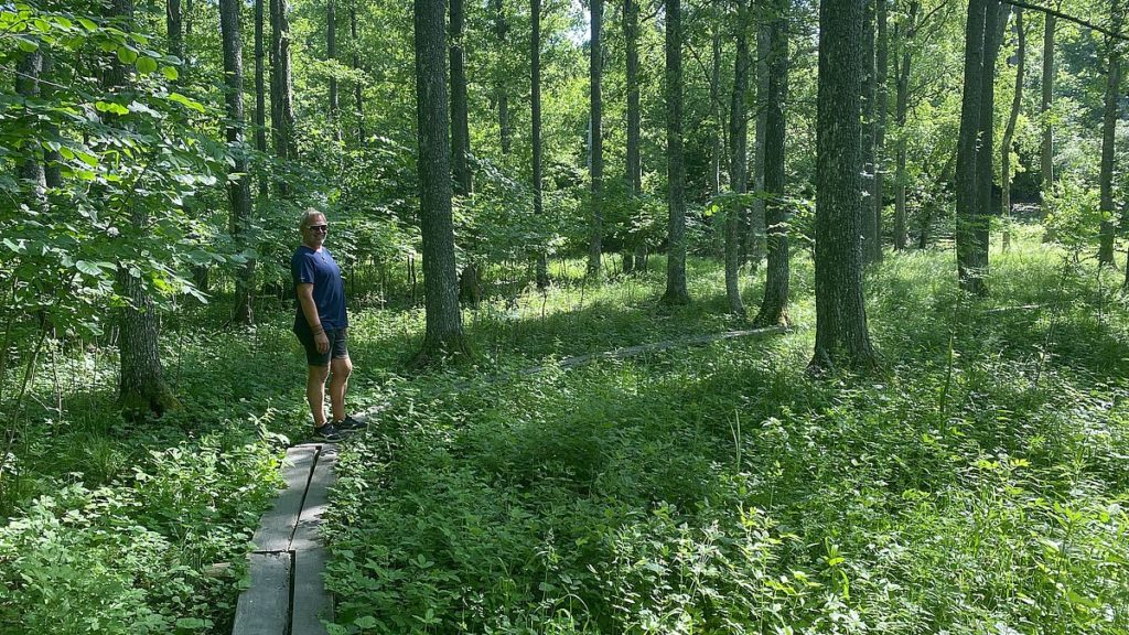 Norr Malma naturreservat