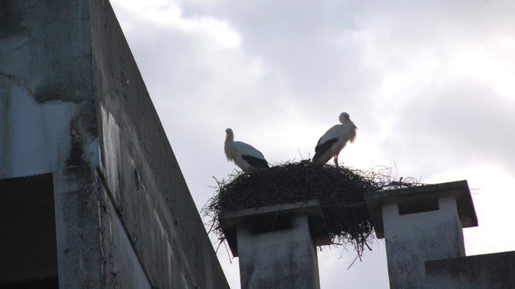 Storkar Portugal
