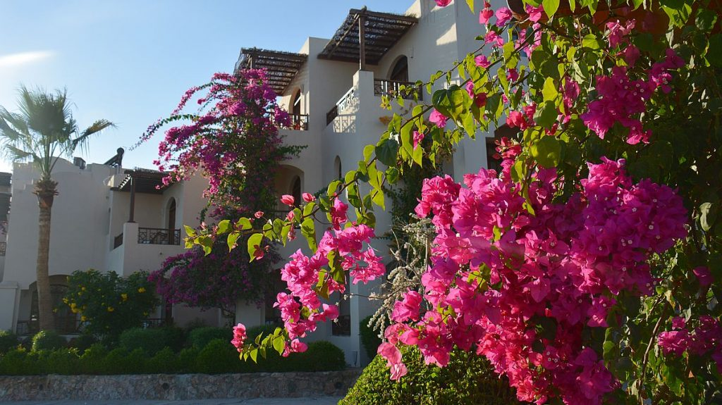 Sultan Bey Hotell i El Gouna