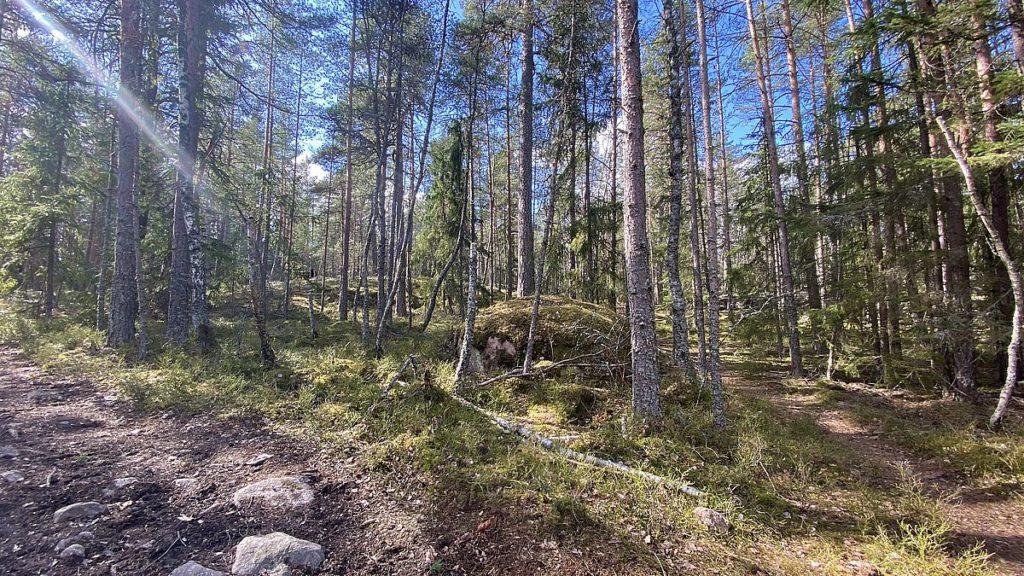 Törnskogens naturreservat