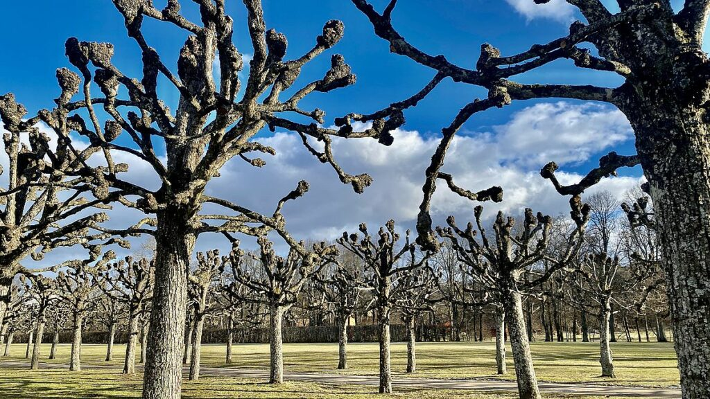 Ulriksdals slottspark